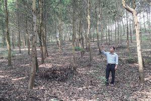 Kỳ vọng trồng cây gỗ lớn để xóa nghèo bền vững