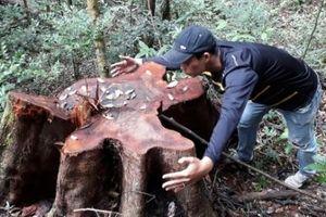 Gia Lai: Để mất hơn 9000 ha rừng, Ban Quản lý rừng phòng hộ Ðức Cơ bị đề nghị xử lý