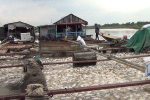 Nỗi đau chồng chất ở làng cá bè La Ngà