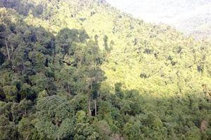'Bóng' Phúc Sơn trong dự án xin phá rừng tại Quốc Oai