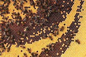 Từ 10-6: Dùng lửa để lấy mật ong rừng, phạt đến 3 triệu đồng