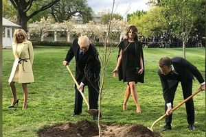 Cây sồi ông Macron tặng ông Trump 'chết trong khi kiểm dịch'