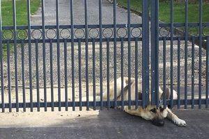 Cảm thương chú chó ngóng chờ người chủ đã qua đời