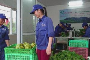 Hà Nội tăng cường công tác quản lý an toàn thực phẩm ngành nông nghiệp