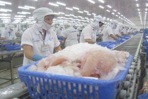 Nông dân lao đao vì xuất khẩu lúa gạo, cá tra sang Trung Quốc giảm