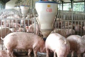 Dân bức xúc vì nhiều trang tung tin giả nhiễu loạn về giá lợn
