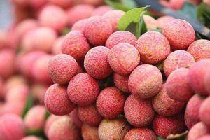 Vải thiều đầu vụ 40-65.000 đồng/kg, Bắc Giang thu gần 2.000 tỷ đồng