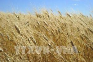 Giá nông sản Mỹ biến động trái chiều tuần qua
