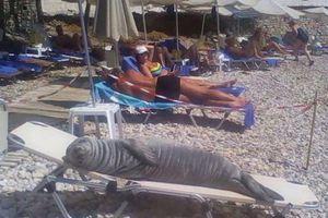 Những hình ảnh siêu hài hước vô tình 'chộp' được trên bãi biển