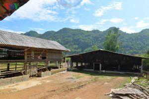 Người dân Sơn La thu nhập hàng trăm triệu từ vốn vay hỗ trợ nông dân