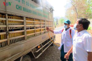 Bình Thuận phát hiện thêm ổ dịch tả lợn Châu Phi