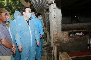 Bí thư Thành ủy Hoàng Trung Hải kiểm tra công tác phòng chống dịch tả lợn tại Quốc Oai