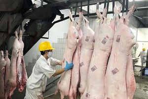 TP Hồ Chí Minh kiểm soát chặt nguồn thịt lợn đưa vào hệ thống siêu thị