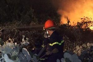 Dập tắt đám cháy rừng quy môn lớn ở bán đảo Sơn Trà