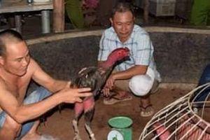 Bắt 27 đối tượng cá cược chọi gà, thu giữ hàng trăm triệu đồng