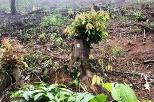 Vụ Ban Quản lý rừng phòng hộ chiếm 5 tỷ: Khởi tố thêm 5 đối tượng
