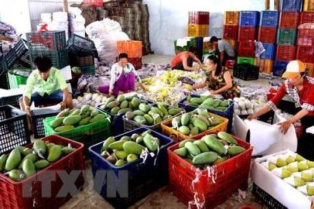 Tạo điều kiện thông quan nhanh cho doanh nghiệp xuất khẩu nông sản