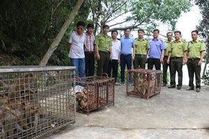 Ngăn chặn buôn bán động vật hoang dã xuyên quốc gia: Cần đồng bộ và quyết liệt