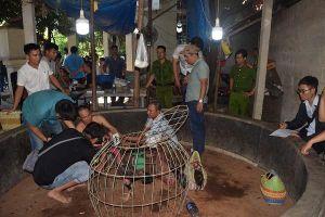 Thừa Thiên Huế: Bắt quả tang 27 đối tượng đá gà ăn tiền, thu giữ hơn 130 triệu đồng