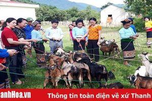 Trao hỗ trợ 37 con dê giống sinh sản cho hội viên, phụ nữ nghèo dân tộc thiểu số