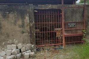 Xung quanh vụ người đàn ông bị hổ tấn công ở DNTN Thanh Cảnh