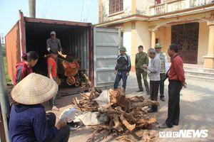 Dân làng Phụ Chính, Hà Nội sắp bán đấu giá hơn 5 tấn gỗ sưa, đắt nhất 32 triệu đồng/kg