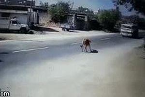 Tránh con bò, tài xế xe bồn đánh lái không tưởng, xoay 90 độ trên đường