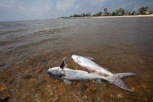 Vùng chết trên vịnh Mexico có thể đạt mức gần 21.000 km2