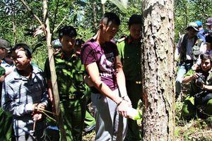 Đầu độc rừng thông Lâm Đồng: Bắt thêm nghi phạm 'phá rừng chuyên nghiệp'