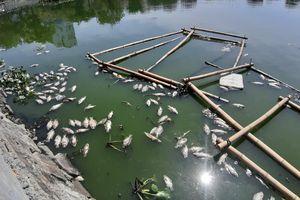 Đà Nẵng: Cá chết ở nơi ông Dũng 'lò vôi' từng dự kiến xử lý ô nhiễm