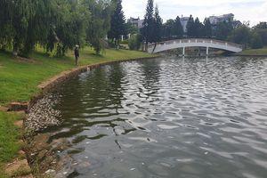 Cá chết bất thường nổi đầy hồ Bảo Lộc, mỗi ngày vớt 40 - 50 kg