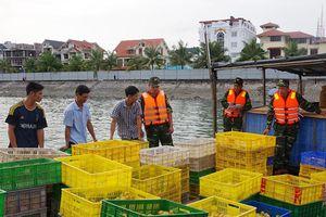 Biên phòng Quảng Ninh thu giữ 24.000 con gà, vịt giống từ Trung Quốc