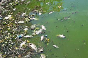 Cá chết lềnh bềnh ở 2 hồ Đà Nẵng từng từ chối ông Dũng 'lò vôi' xử lý ô nhiễm