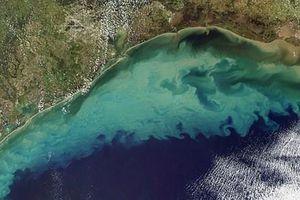 Cảnh báo về hiện tượng mở rộng 'vùng biển chết' tại Vịnh Mexico