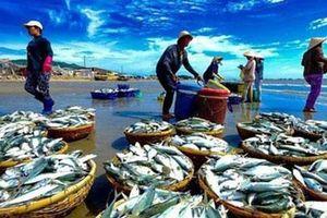 Xuất khẩu thủy sản sẽ khởi sắc hơn vào những tháng cuối năm