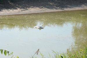 Lấy nước kênh ô nhiễm làm nước sạch bán cho dân