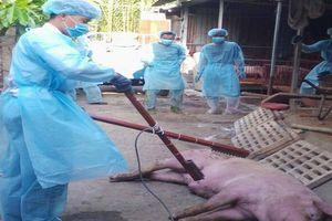 Giá thịt heo ở TP.HCM bình thường sau ngày dịch tả lợn châu Phi xuất hiện