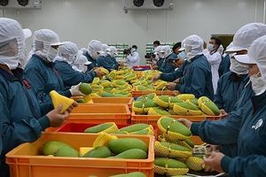 Nông sản xuất khẩu tồn dư thuốc bảo vệ thực vật: Đáng lo ngại