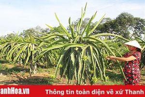 Xã Quang Trung nỗ lực về đích nông thôn mới
