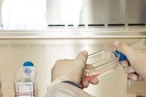 Kháng thuốc kháng sinh có thể giết chết 10 triệu người mỗi năm