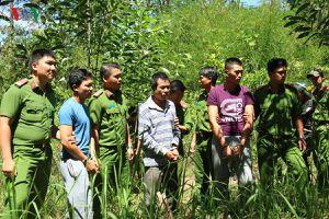 Lâm Đồng bắt thêm đối tượng vụ hạ độc chết hơn 10ha rừng thông