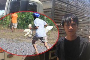 'Hôi vịt' trên xe tải bị lật ở Quảng Bình: 'Có người bắt đến chục con, lái xe chạy theo van xin mà không được'