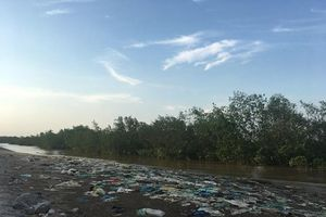 Rừng ngập mặn 'kêu cứu' trước lượng rác khổng lồ đổ về Hải Phòng