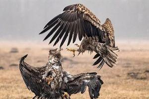 Đại bàng kịch chiến: Té ngửa vì cái kết không tưởng