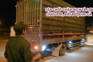 Lập chốt chặn dịch tả lợn châu Phi, bắt được xe gà ngay cửa ngõ Sài Gòn