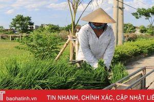 Thiếu nước cục bộ ở Hà Tĩnh: Nơi chậm thời vụ, nơi chưa thể bón thúc!