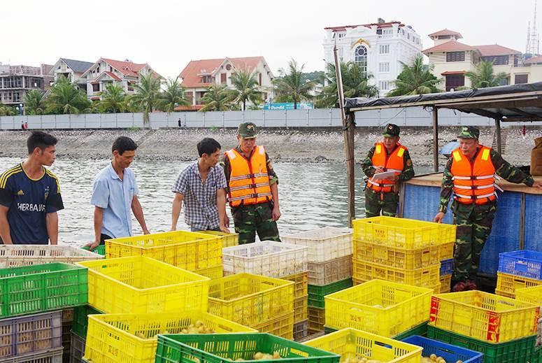 Quảng Ninh: Bắt, giữ 24 nghìn con gà, vịt giống nhập lậu
