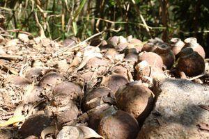 Quảng Bình: Người dân phát hiện 105 quả bom bi dưới lòng sông