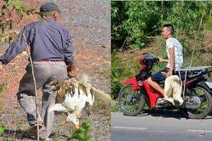 'Hôi vịt' ở Quảng Bình: Nhân chứng nói dân địa phương bắt vịt, chính quyền lại bảo đa số là người đi đường
