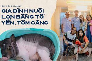 Gia đình ở Sài Gòn nuôi chú heo nặng gần 60kg, thực đơn riêng có tôm càng, xúc xích Đức, tổ yến